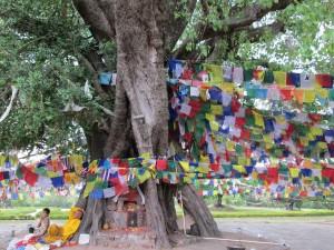 Lumbini Tree 1