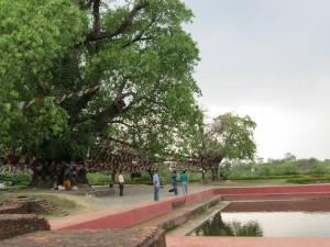 Lumbini Tree 2