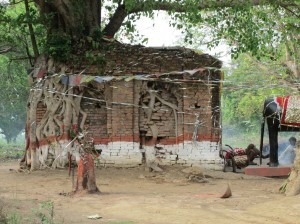 Temple & Tree Kapilvastu 2